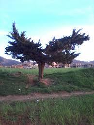 file batman tree wiki earth 2014dz jpg wikimedia commons