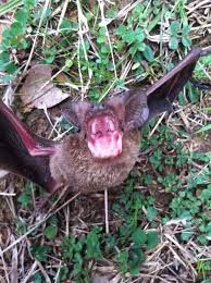 local veteran owned wildlife control how to get rid of bats