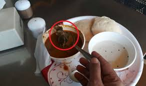 rat cuisine dead rat found in sambhar served by pappilon fast food from
