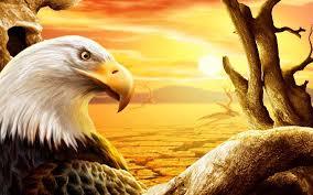 eagle in the desert wallpaper 212845