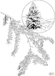 eastern hemlock or canadian hemlock tree coloring page free