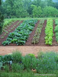 Kitchen Garden Designs Vegetable Garden Garden Pinterest Vegetable Garden Drip