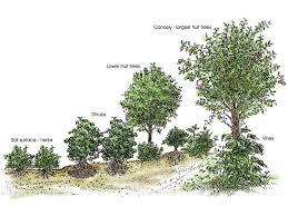 Fruit Tree Garden Layout Creating A Forest Garden Nashville Farm