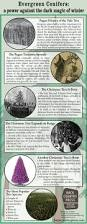 yule tree u2022 a history of conifers and christmas
