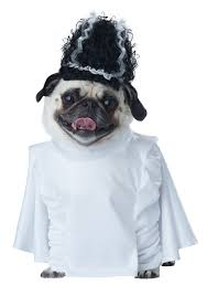 pug halloween costume for baby the cutest pet halloween costumes for cats and dogs