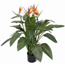 contemporary indoor plants uk american hwy