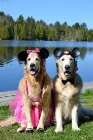 funny dog costumes halloween 135 best halloween animals images on pinterest animals pet