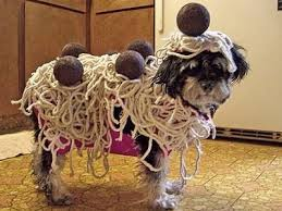 pet costumes 20 creative outrageous pet costumes