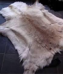 Reindeer Hide Rug Sorry Rudolph I Might Be Warming To This Reindeer Rug Trend