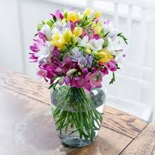 freesia flower freesias freesia flower bouquets blossoming gifts