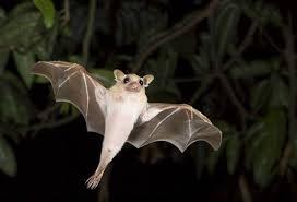 small bat 25 of the cutest bat species mnn nature
