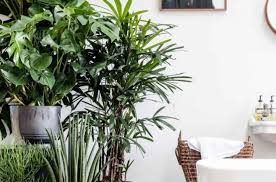 most inspiring plant top indoor plants infatuate common house