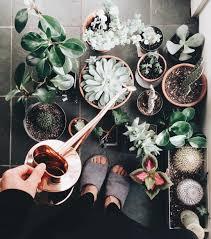 houseplant club on instagram u201cthe watering ritual momoe