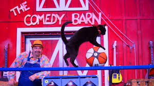 Comedy Barn In Pigeon Forge Tennessee Amazing Animals U0026 Exotic Pets At The Comedy Barn Gatlinburg