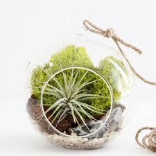 geode quartz crystal air plant terrarium kit small hanging