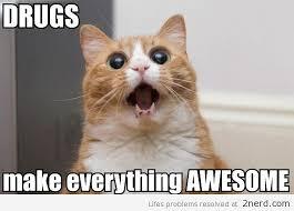 Cat Cocaine Meme - pictures of cats on drugs cruella de kill