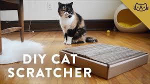 Cool Cat Scratchers Diy Cardboard Cat Scratcher With Pudge Youtube