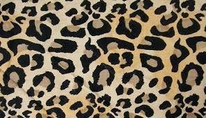 leopard fabric leopard fabric cool fabric leopard skin texture free download hi res