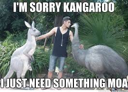 Funny Sorry Memes - 45 most funny kangaroo meme photos and images