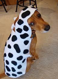 Pet Halloween Costumes Dogs Diy Dog Dalmatian Costume Diy Dog Costumes Dog