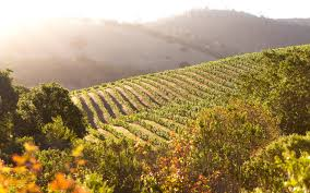 three days in napa valley u2014 what to do and see travel leisure