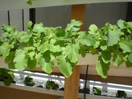 diy aquaponics 5 easiest veggies u0026 herbs to grow from seed in