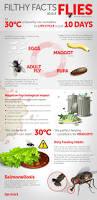common fly species rentokil pest control