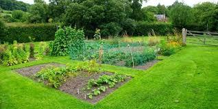 cool beginner vegetable garden guideline for beginner vegetable