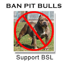 american pitbull terrier illegal where are pit bulls banned in the u s ban pit bulls