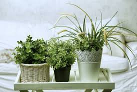 plante verte dans une chambre 5 plantes à mettre dans la chambre pour trouver le sommeil