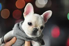 knit puppy sweater sweater