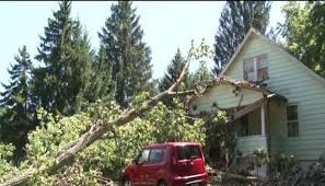 update tree company extending to in need