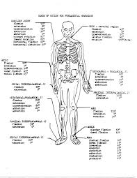 anatomy and physiology sheets 28 images free anatomy and
