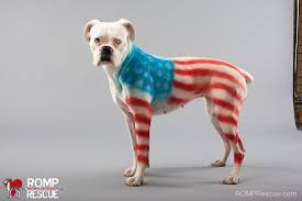 Patriotic Halloween Costume Ideas 4th July Dog Costumes American Flag Flag Fourth