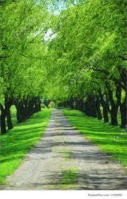 green tree stock photo i1385881 at featurepics