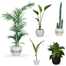 plants vectors photos and psd files free download