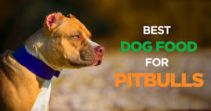 dog food for pitbulls muscular body needs high protein diet