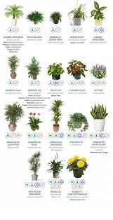indor plants why having indoor plants can be good for your business