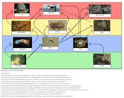 food webs storyboard by oliversmith
