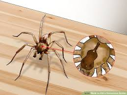 I Tried Killing A Spider - 3 ways to kill a venomous spider wikihow