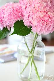 Images Flowers 94 Best Flowers Images On Pinterest Plants Gardening And Flowers