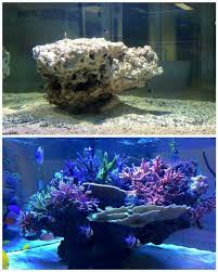 Saltwater Aquascaping Medred 2012 Featured Nano Reefs Featured Aquariums Monthly
