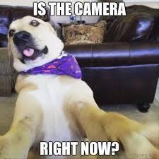 Meme Dog - 50 funny dog memes you need to see