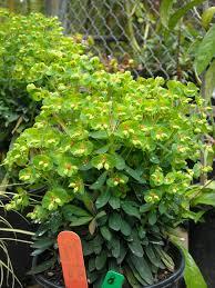 san francisco botanical garden society u0027s 45th annual plant sale