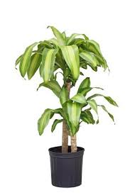 131 best house plants care images on pinterest indoor house
