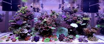 Aquascape Reef The Vanishing Of The Nuance Page 3 Reef2reef Saltwater And