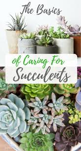 best 25 indoor succulent planter ideas on pinterest succulents