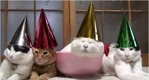 Happy New Year Cat Meme - happy new year cats vs cancer