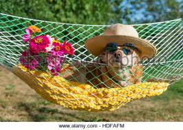 dog with sunglasses and flowers in hammock stock photo royalty