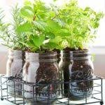 indoor herb garden ideas homesteading indoor gardening tips herb